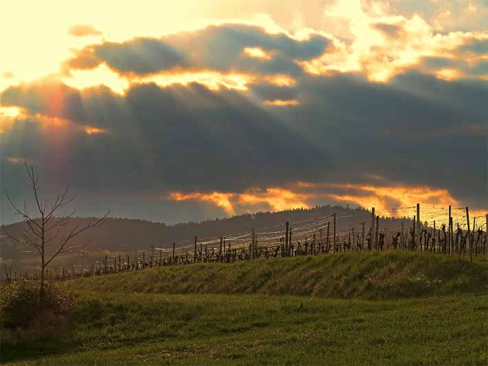 Sonnenuntergang, Deutsche Weinstrasse in Rheinland-Pfalz