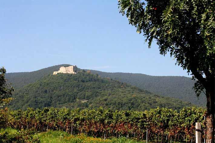 Weinanbau, Hambacher Schloss in der Pfalz